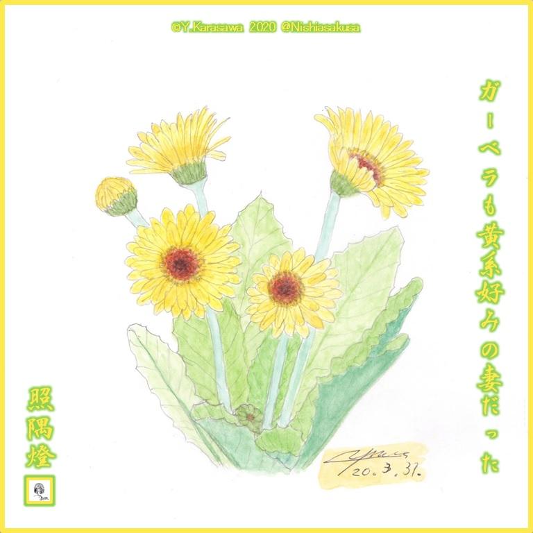 200331ガーベラ黄金色LRG