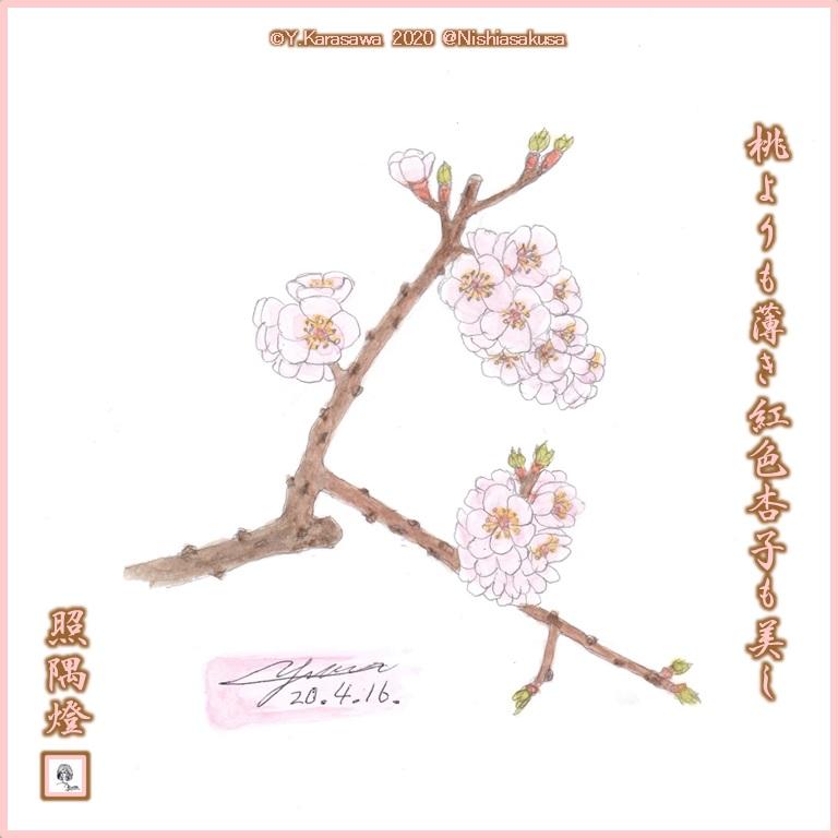 200416杏子LRG