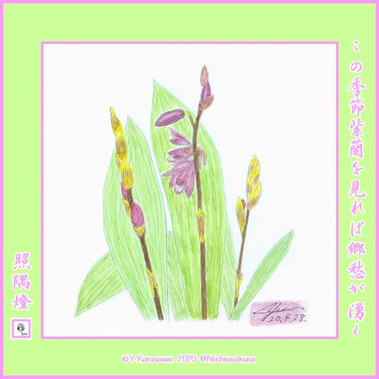 200428紫蘭lRG