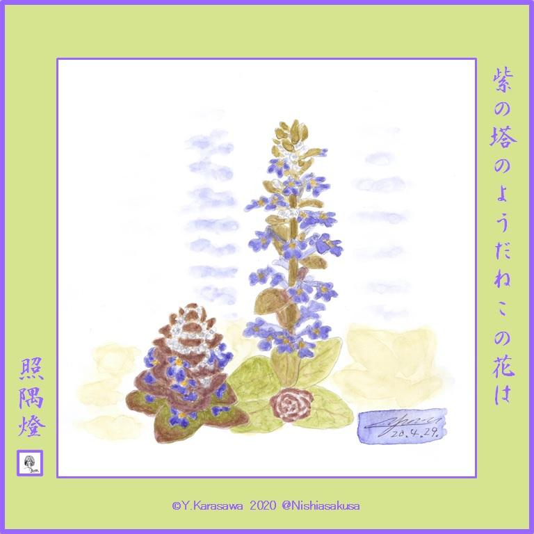 200429西洋十二単LRG