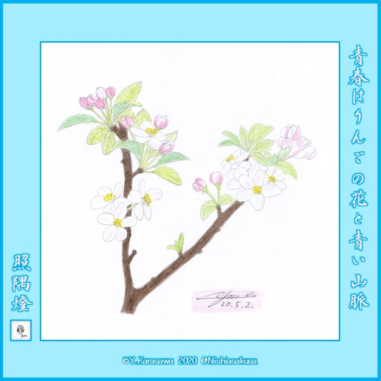 200502りんごの花LRG