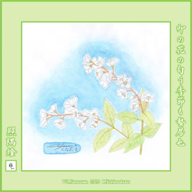 200509姫空木LRG