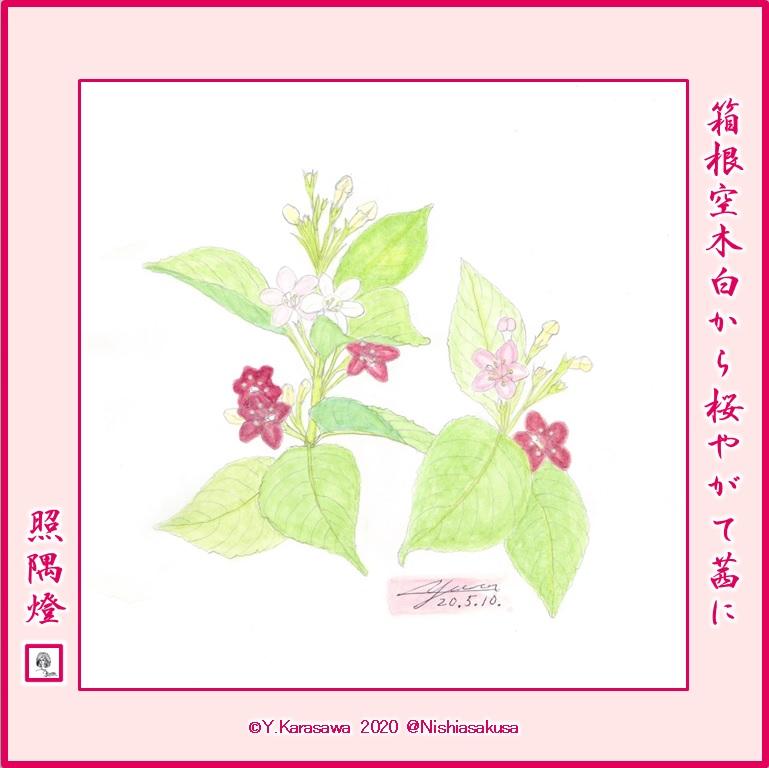 200510箱根空木LRG