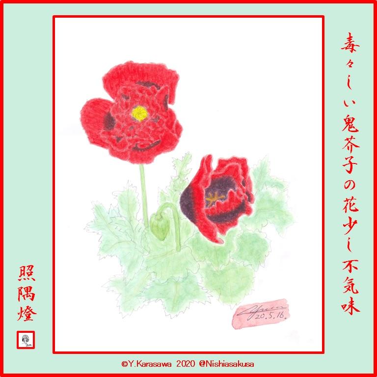 200516鬼芥子LRG