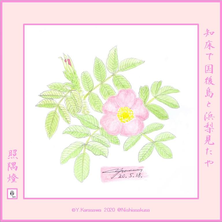200518浜梨の花LRG