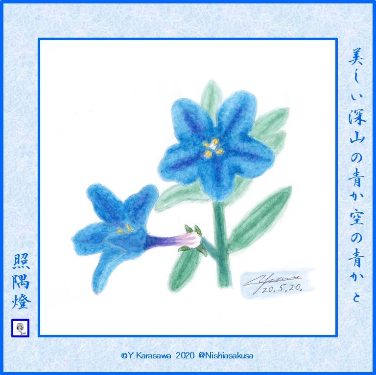 200520深山蛍葛LRG