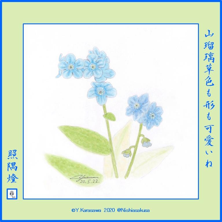 200522山瑠璃草LRG