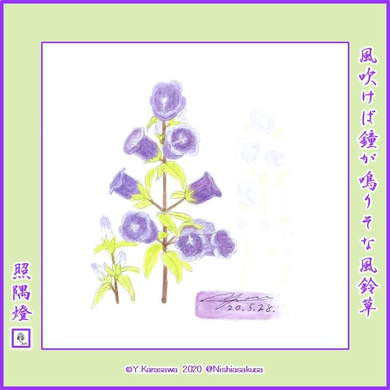 200528カンパニュラ紫LRG