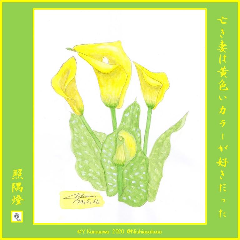 200531黄色いカラーLRG
