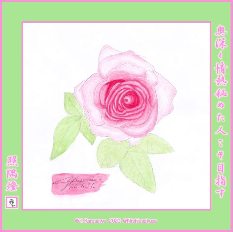 200607ピンクのバラLRG