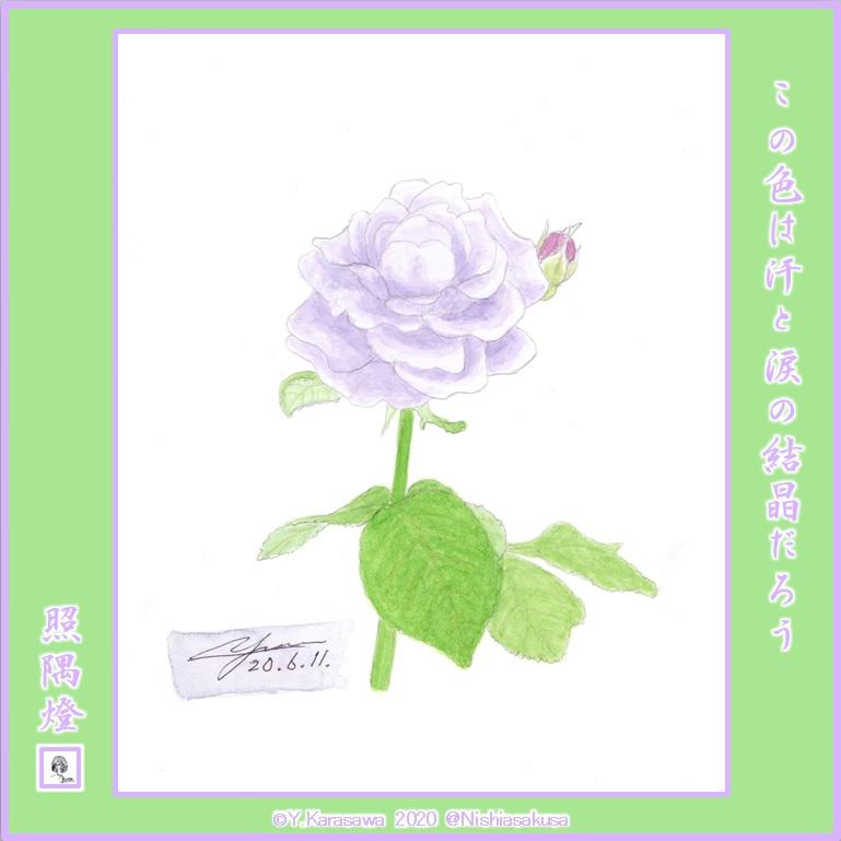 200611薄紫のバラLRG