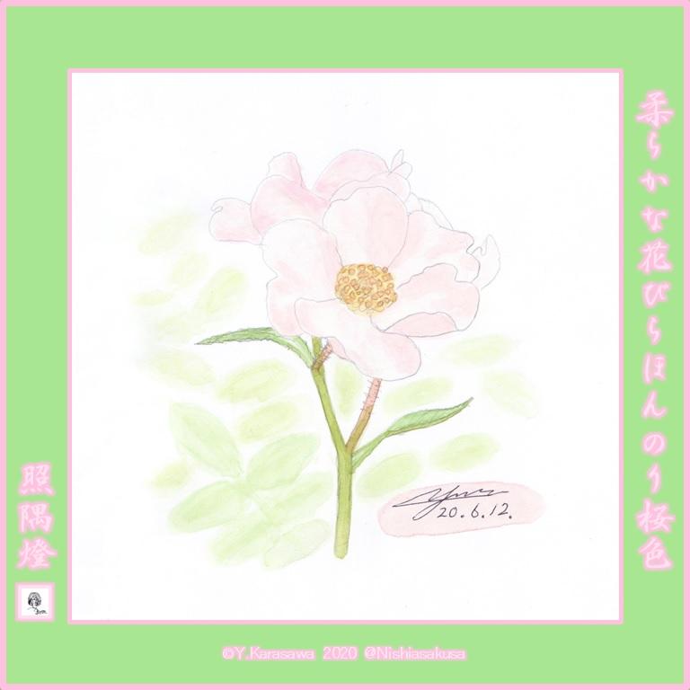 200612桜色のツルバラLRG