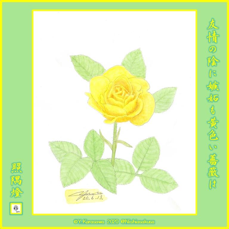 200613黄色い薔薇LRG