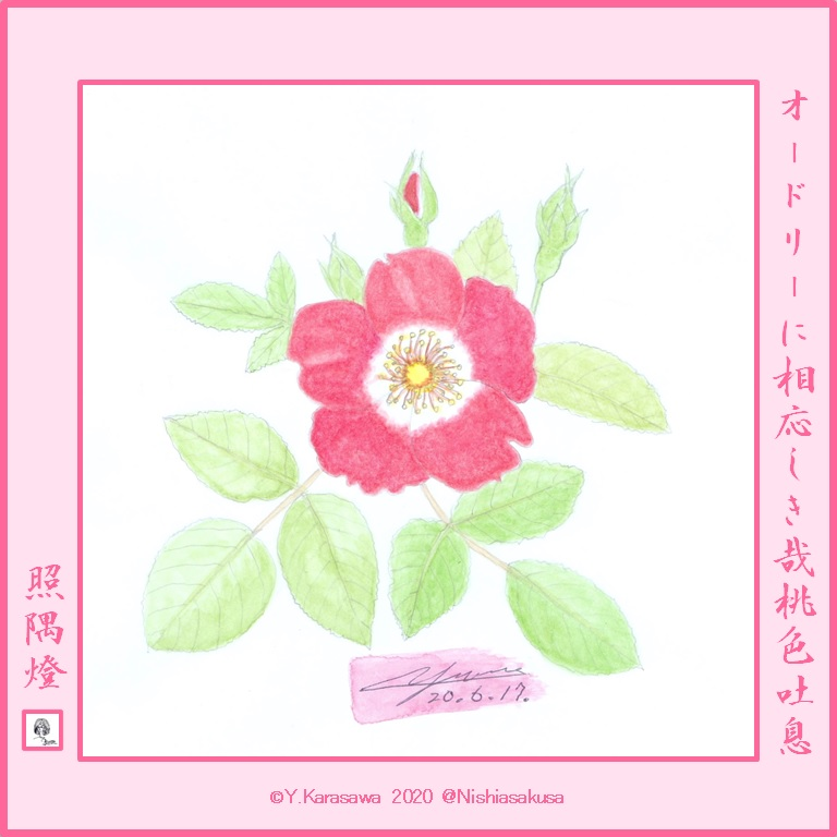 200617バラ・ピンクカクテルLRG
