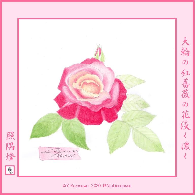 200618大輪の紅薔薇LRG