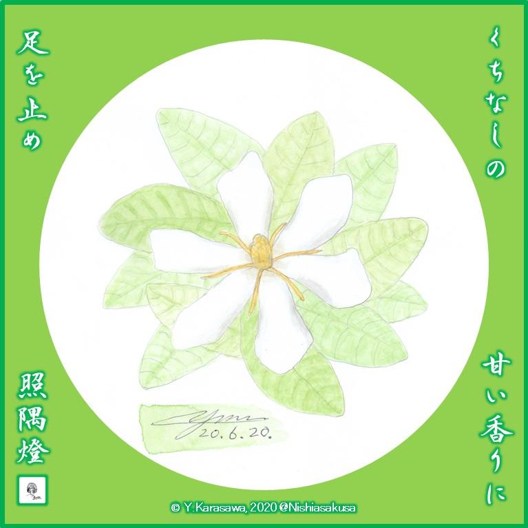 200620梔子の花LRG