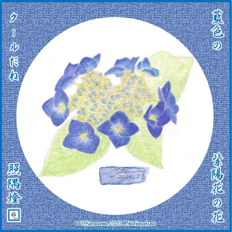 200623藍色の顎紫陽花LRG