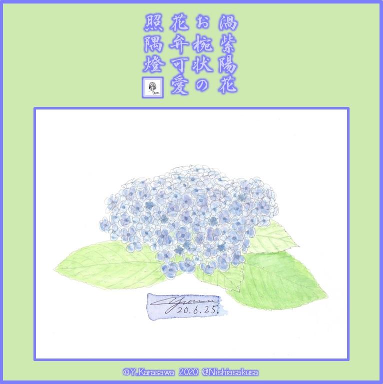 200625渦紫陽花LRG