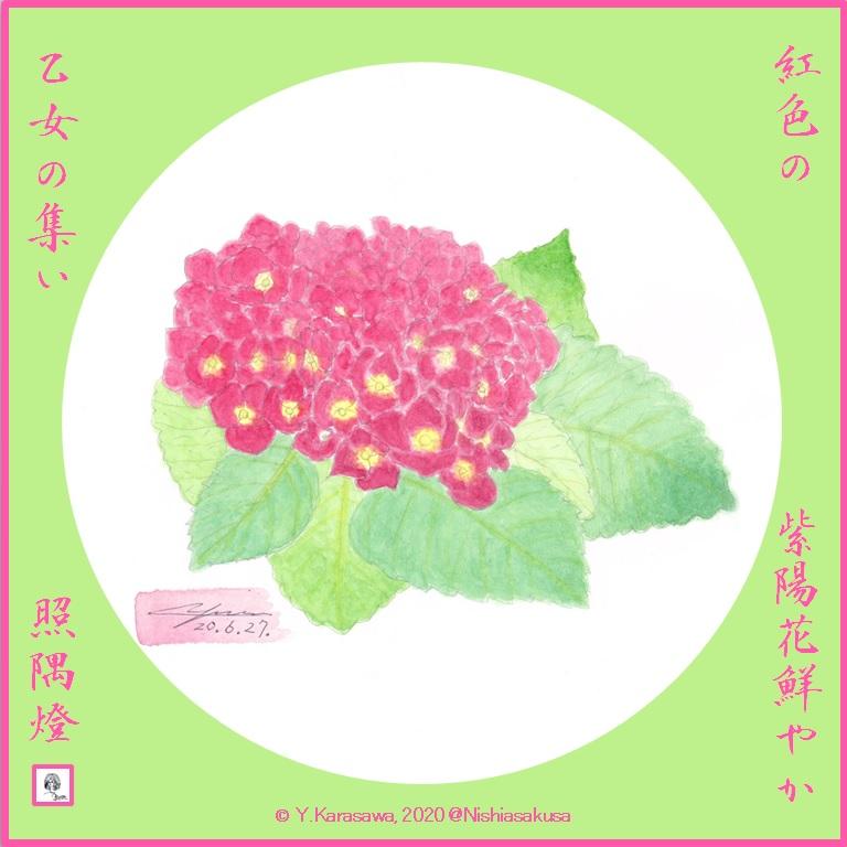 200627紅色の紫陽花LRG