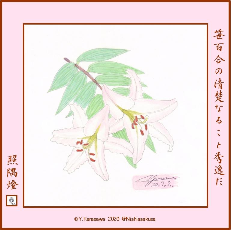 200702笹百合LRG