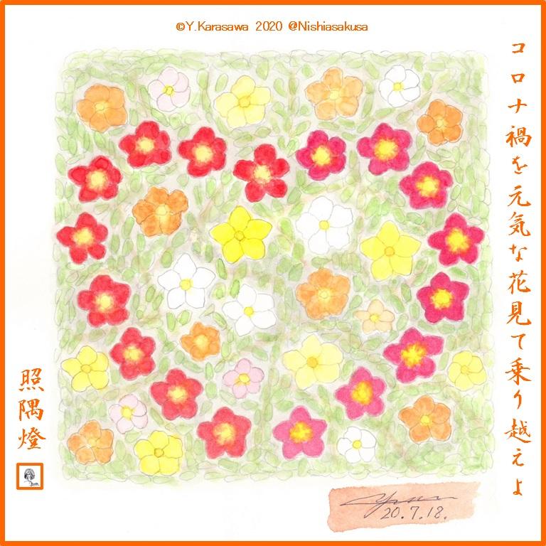 200718ポーチュラカLRG