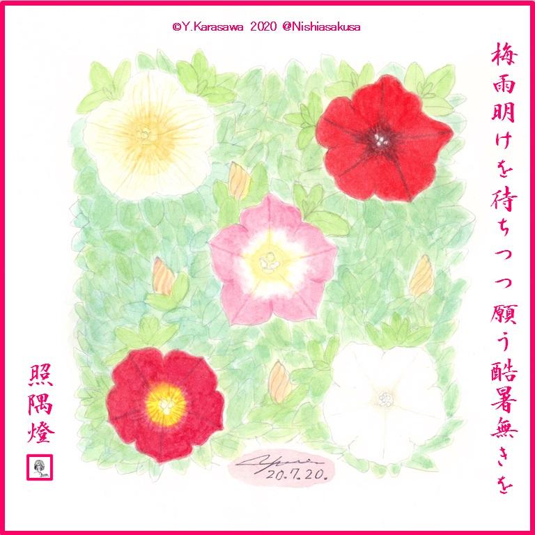 200720ペチュニア5色LRG