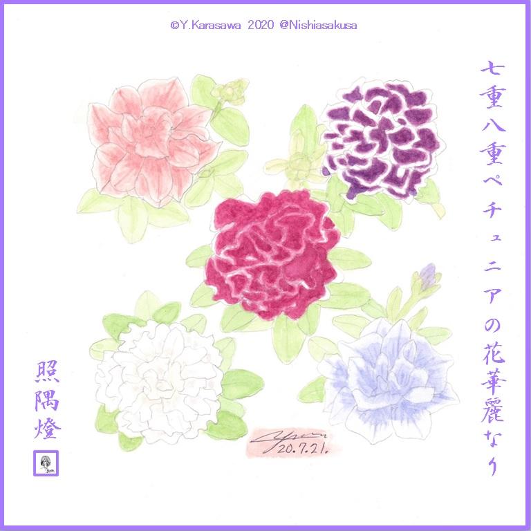 200721八重咲ペチュニア5種LRG