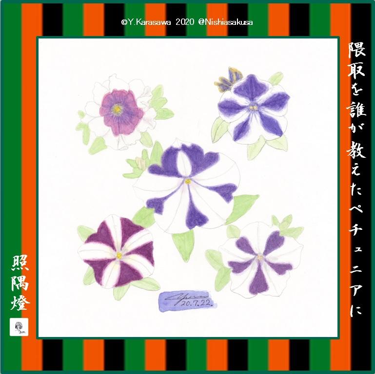 200722紫模様のペチュニア5種LRG