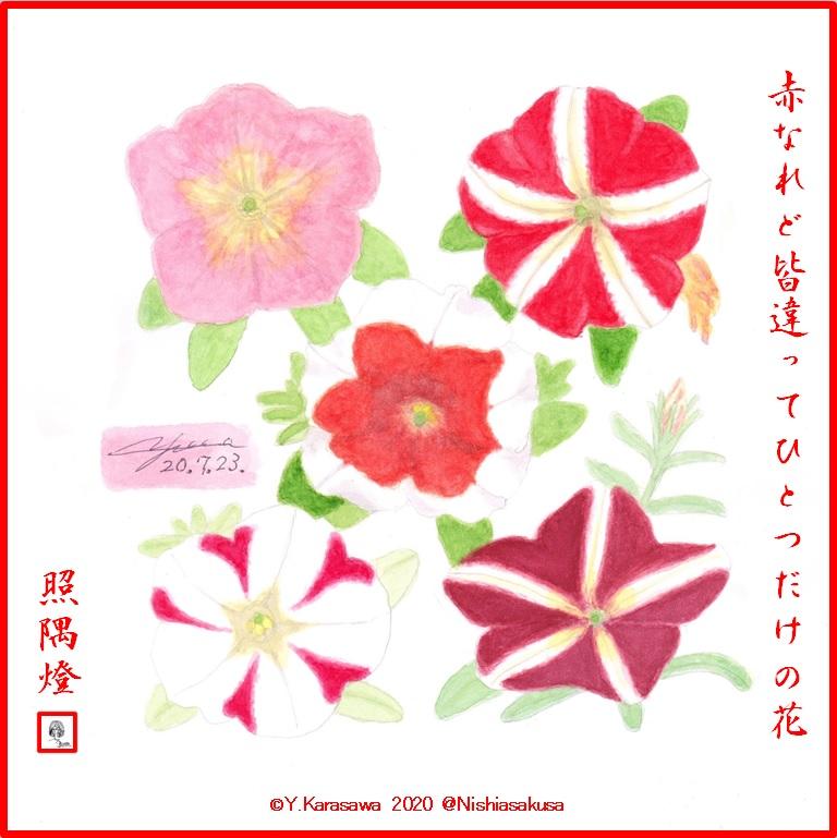 200723赤色系ペチュニア5種LRG