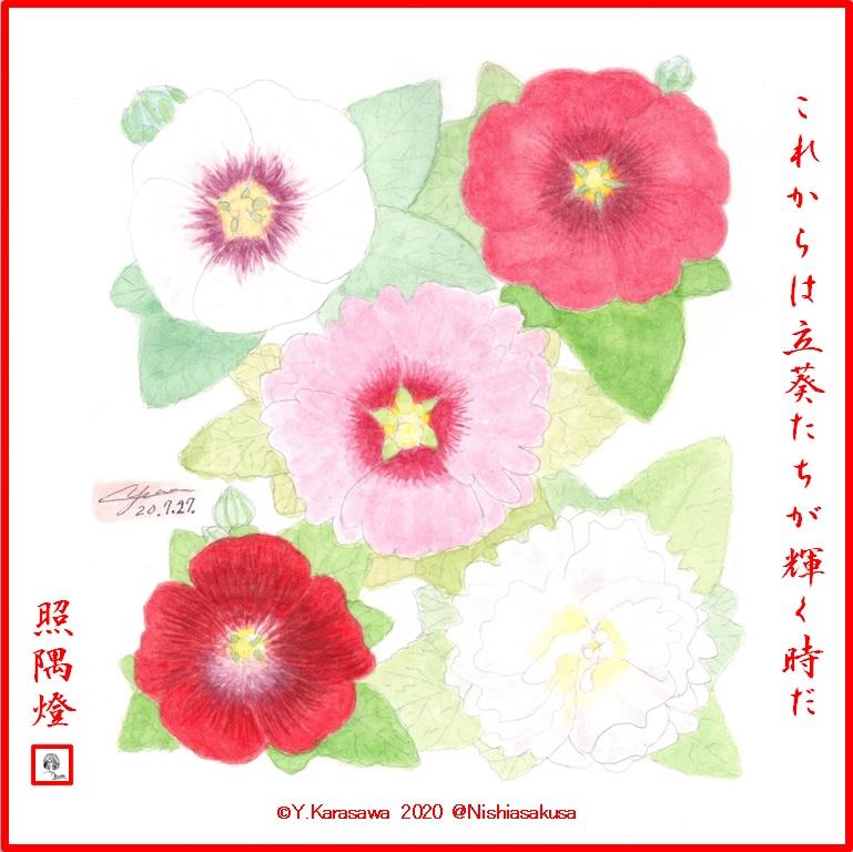 200727立葵5色LRG