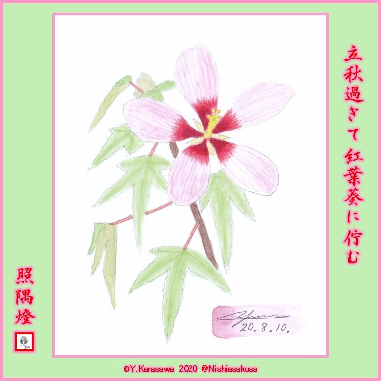 200810紅葉葵ピンクLRG