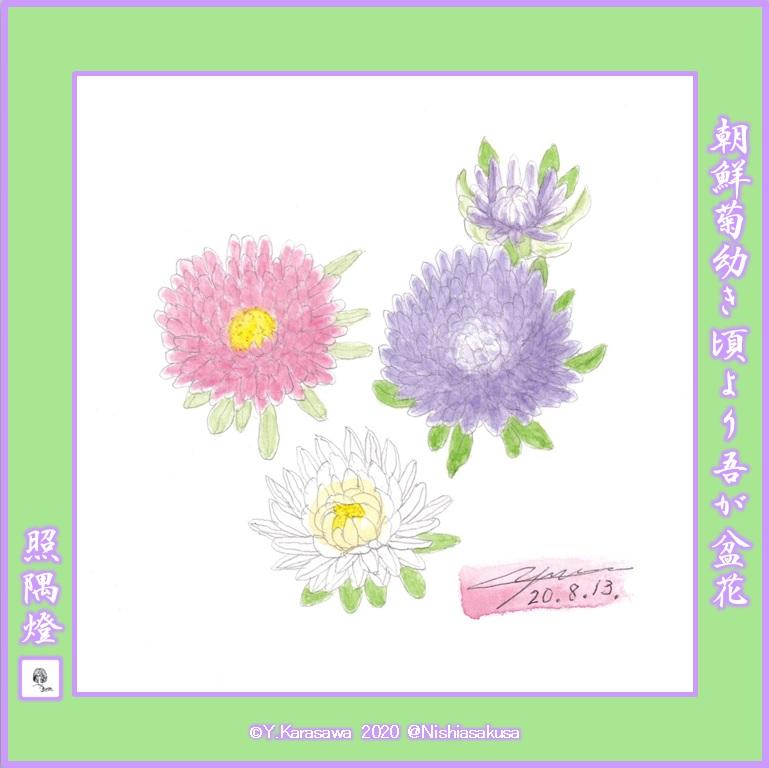 200813朝鮮菊LRG