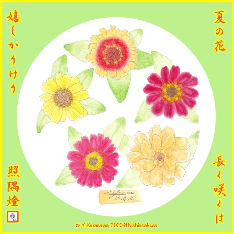 200815百日草中輪5種LRG