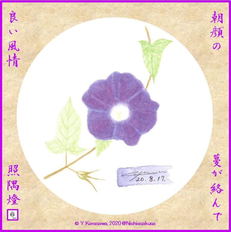 200817朝顔紫LRG