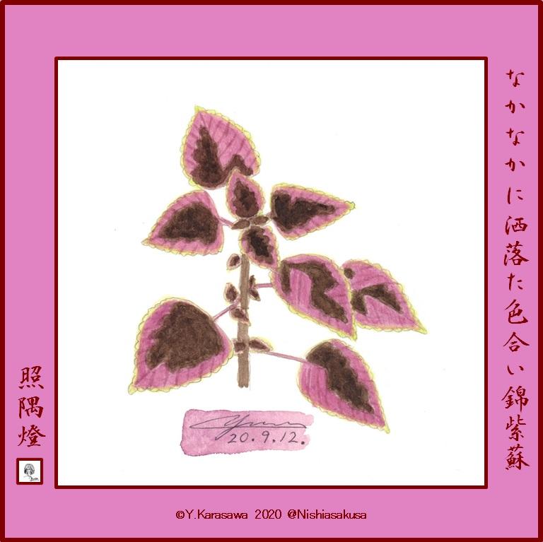 200912コリウス赤紫と焦げ茶に黄緑の縁LRG