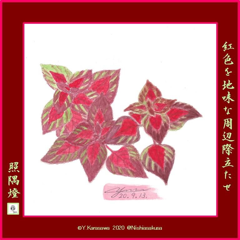 200913コリウス紅色と臙脂LRG