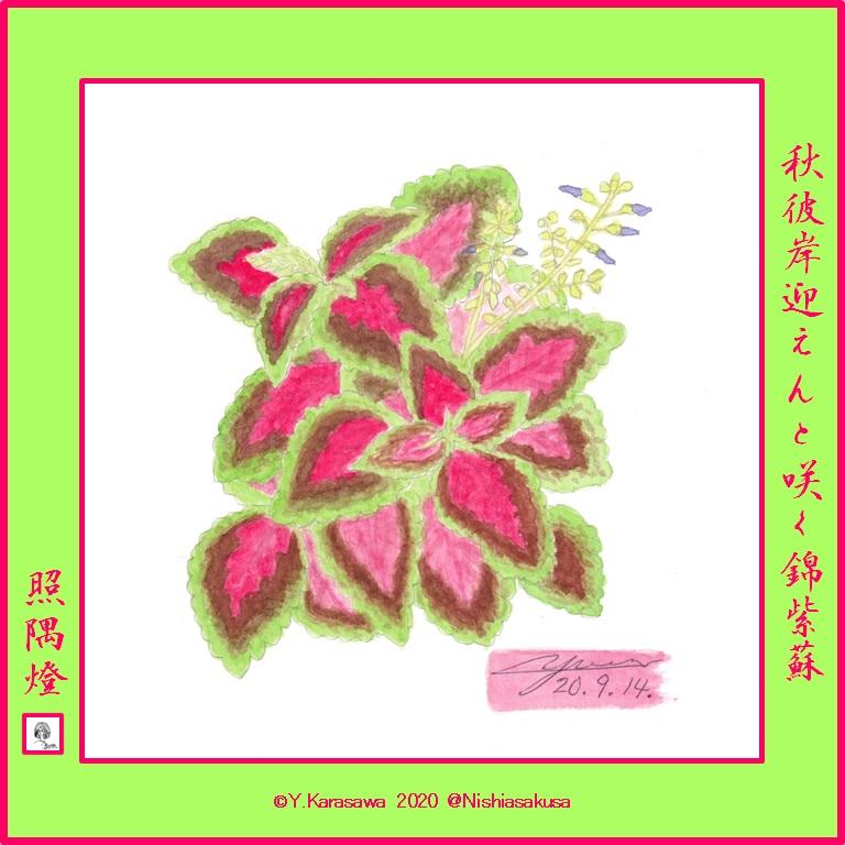 200914コリウス紅色焦げ茶黄緑LRG