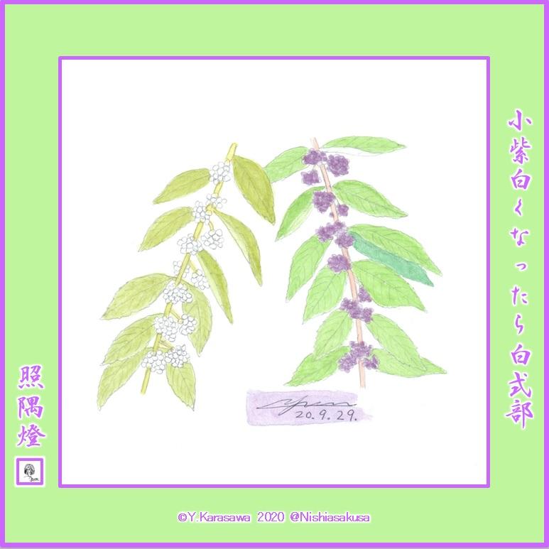 200929小紫と白式部LRG