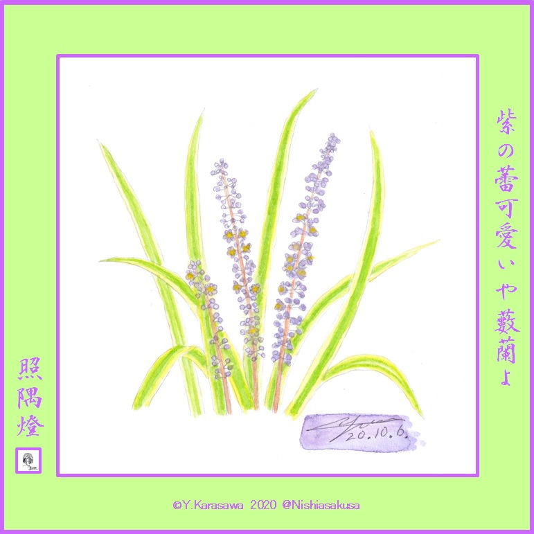 201006藪蘭薄紫斑入り葉LRG