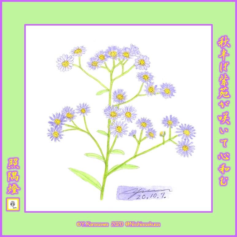 201007紫苑LRG