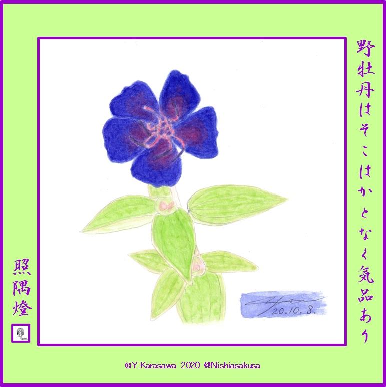 201008紫紺野牡丹LRG
