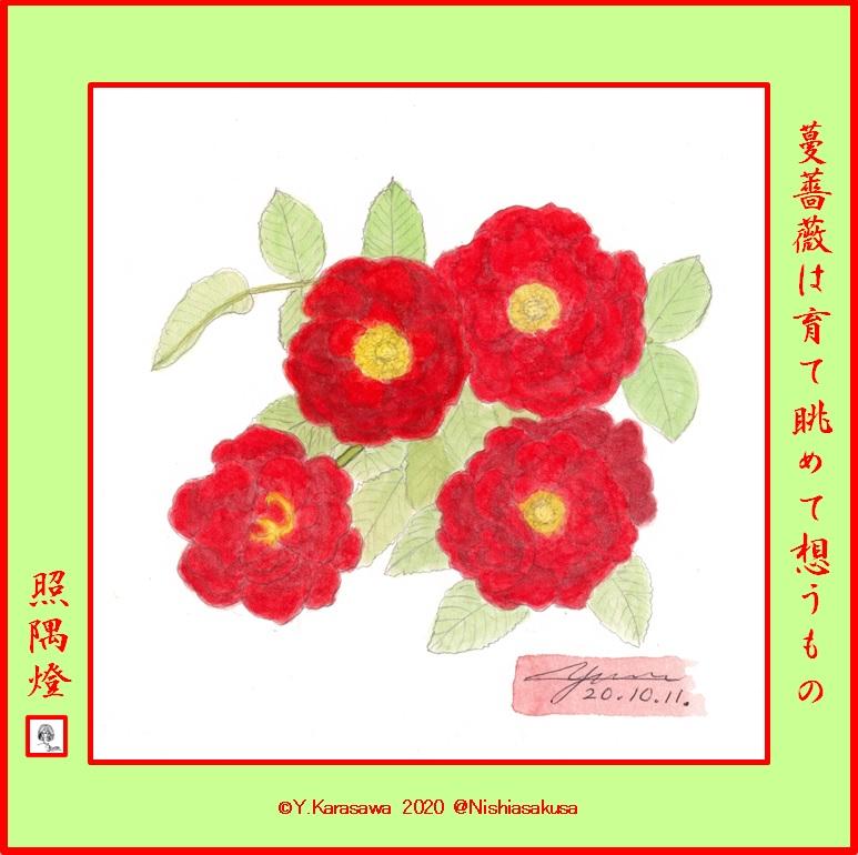 201011赤い八重の蔓薔薇LRG