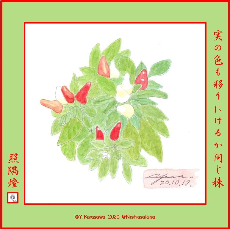 201012五色唐辛子LRG