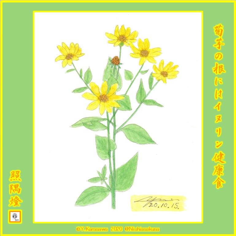 201015菊芋LRG