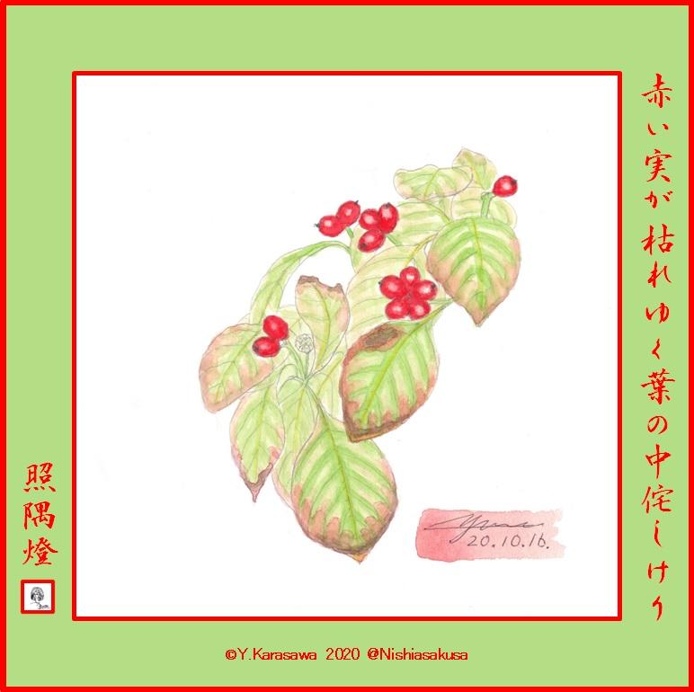 201016花水木の実LRG