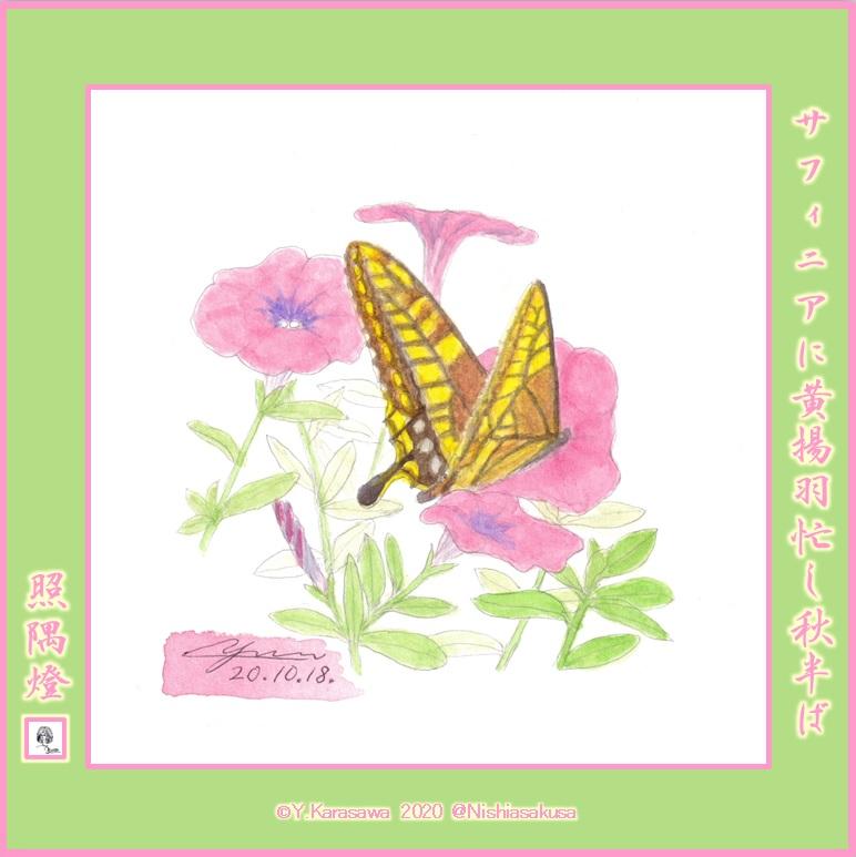 2010181ピンクのサフィニアに黄揚羽LRG