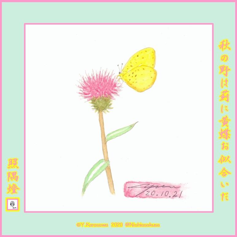 201021薊に黄蝶LRG