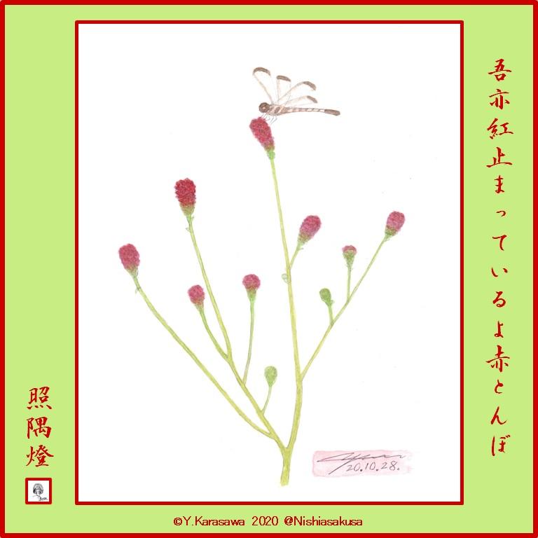 201028吾亦紅にコノシメトンボLRG