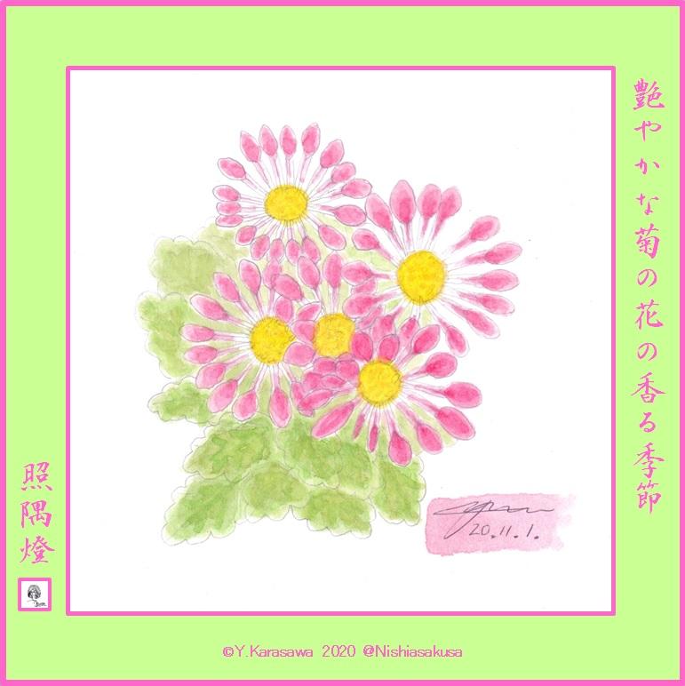 201101ピンクの管物中菊LRG