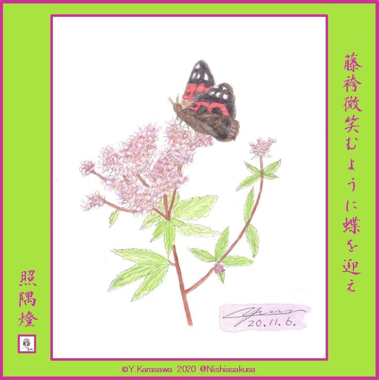 201106藤袴に赤立羽LRG